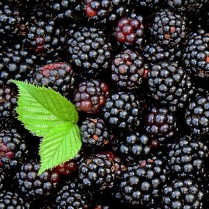 Key Vape Blackberry Concentrates